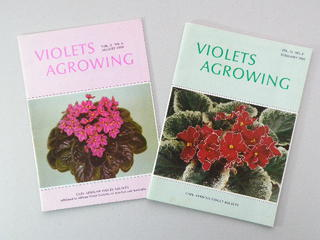 Violets Agrowing